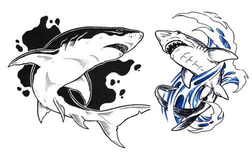 Акула эскиз для тату